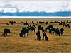 Wild_Beasts_at_Ngorongoro_Crater_Reservation_Area